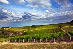 blåa vingårdar arkivfoto