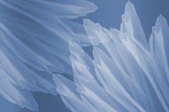 blåa vita blommapetals royaltyfri illustrationer