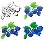 blåbär royaltyfri illustrationer