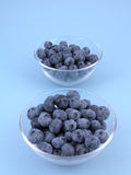 blåbär royaltyfri foto