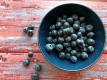 blåbär bowlar nytt fotografering för bildbyråer