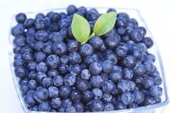 blåbär bowlar nytt Royaltyfria Foton