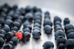 Blåbär med den enkla jordgubben Royaltyfria Bilder