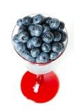 blåbär michigan Royaltyfria Foton