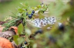 Blåbär och champinjoner Arkivbild