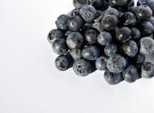 BLÅBÄR slut upp av blåbär Fotografering för Bildbyråer