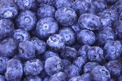 blåbär stänger sig upp Fotografering för Bildbyråer
