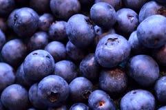 Blåbärbakgrund av organiska blåbär i sommar arkivfoton