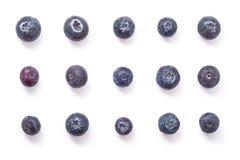 Blåbäret bär frukt bildande Arkivfoton