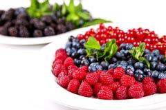 Blåbär rasberry, cranberry och mullbärsträd royaltyfri fotografi