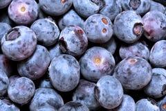 blåbärmakro Fotografering för Bildbyråer