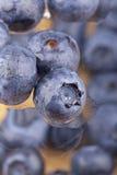 blåbärwaterdrops Arkivfoton