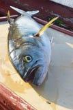 Blåfisk som fångas precis Royaltyfria Foton