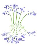 blåklockablommor arkivbilder