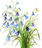 blåklockor Royaltyfria Bilder