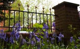 Blåklockor från jordning med viktoriansk stil arbeta i trädgården räcke och trädgården för tegelstenpelare framme av det engelska Arkivfoton