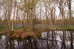 Blåklockor reflekterade i sjön Royaltyfri Bild