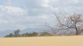 Blåsa sand förbi taggar arkivfoto