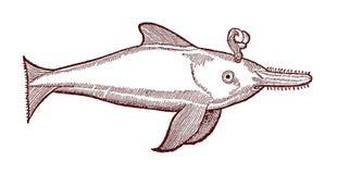Blåsa sawfishen Illustration efter en historisk eller tappningträsnitt från det 16th århundradet Royaltyfria Bilder