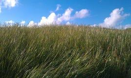 blåsig dag Fotografering för Bildbyråer
