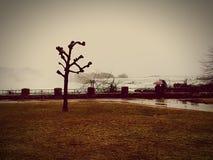 blåsig dag Arkivbild