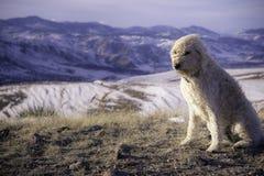 Blåsigt på det gröna berget Fotografering för Bildbyråer