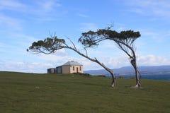 Blåst i vinden Arkivbild
