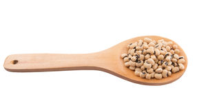 Blåtira Bean On Wooden Spoon II Royaltyfria Foton