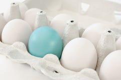 blått ägg Fotografering för Bildbyråer