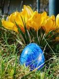 Blått ägg på äng med crocusses Arkivbild