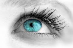 Blått öga på grå färgframsida Royaltyfria Foton