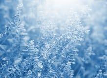 Blått blommar blom- bakgrund Arkivbild
