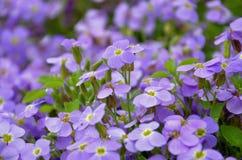 Blått blommar blomsterrabattbakgrund Arkivfoton