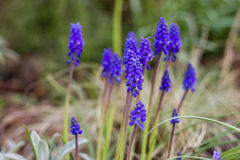 Blått blommar det utomhus- skottet, suddig backround Arkivbilder