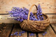 Blått blommar i en korg Arkivfoton