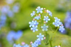 Blått blommar på grön bakgrund royaltyfri bild