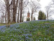 Blått blommar på kullen och det kyrkliga tornet, Litauen Arkivfoto