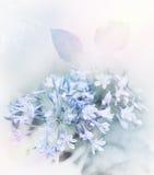 Blått blommar vattenfärgen Royaltyfri Bild