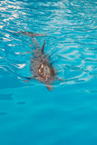 blått delfinsimningvatten arkivfoton