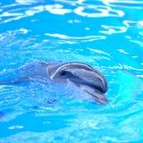 blått delfinvatten Royaltyfri Foto