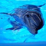 blått delfinvatten Arkivfoto
