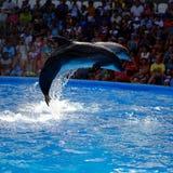 blått delfinvatten Royaltyfri Bild