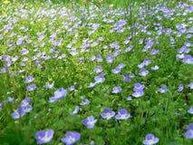 blått fält Arkivfoto