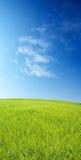 blått fält för korn över skyen Royaltyfri Fotografi