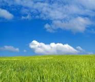 blått fält för korn över skyen Royaltyfri Bild