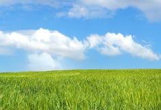 blått fält för korn över skyen Royaltyfria Bilder