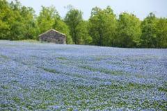 blått fältlin Royaltyfria Bilder
