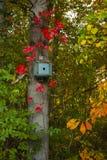 Blått fågelhus som omges av sidor i nedgångfärger Arkivbilder