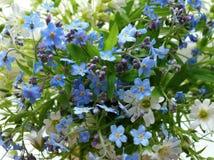 Blått för flora för skönhet för blom för blom- för modell för bukettskogblommor för kronblad för vit blomma för säsong för blad f arkivfoto