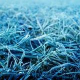 Blått frostigt gräs arkivbilder